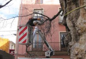 Poda de árboles en diversas zonas de Ibi